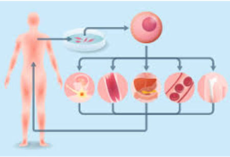 Setting New Standards in Regenerative Medicine